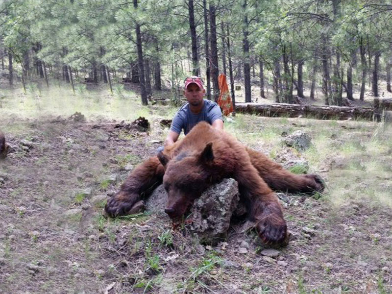 New Mexico Black Bear Hunting